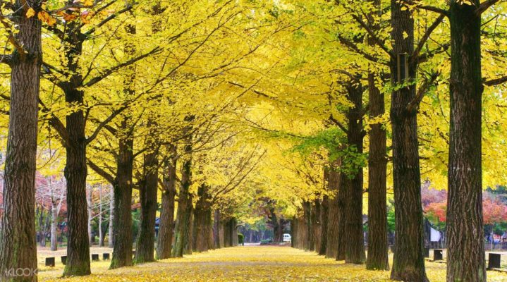 Let's visit Nami Island and Petite France in a day trip