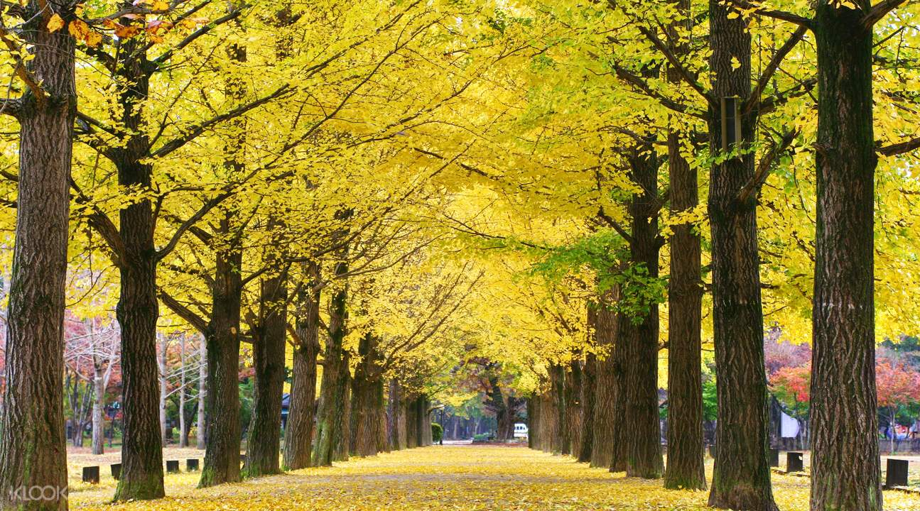 Let S Visit Nami Island And Petite France In A Day Trip