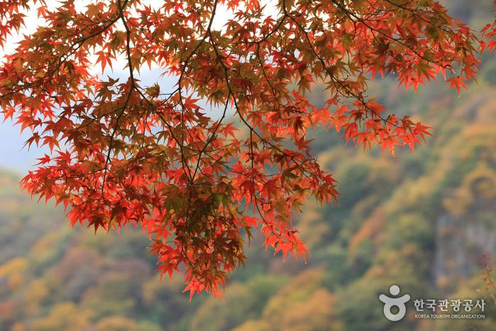 foliage7