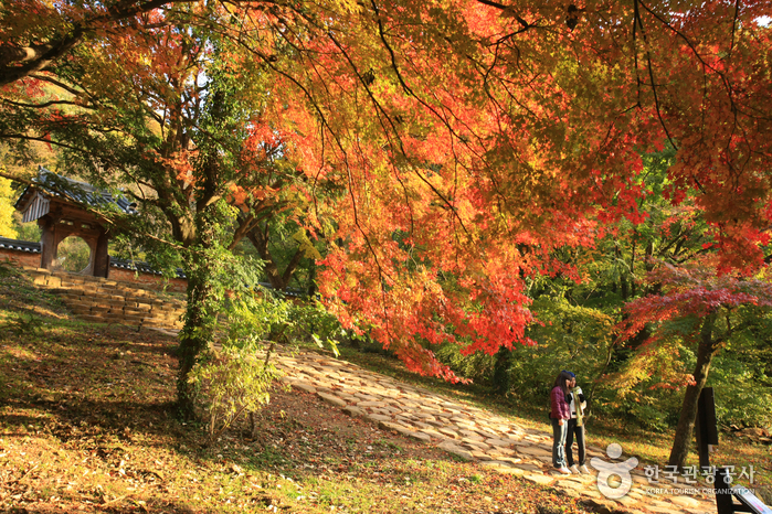 Let's enjoy Korea's Autumn Foliage together!