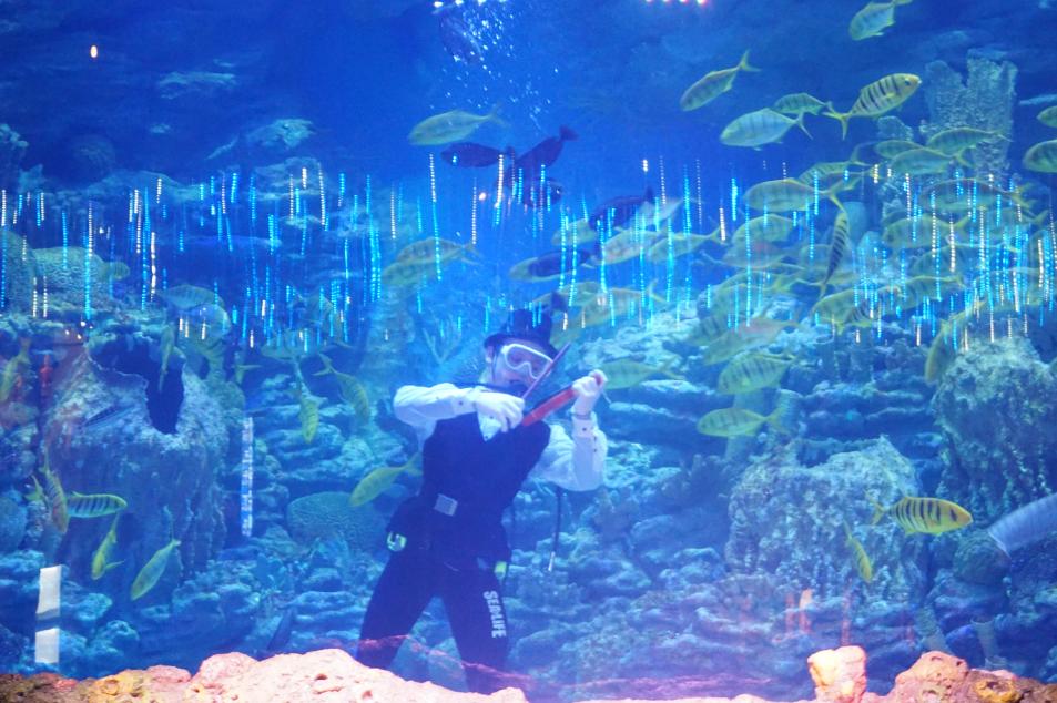 SEA LIFE Busan Aquarium (SEA LIFE 부산아쿠아리움)