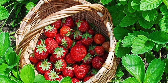 Uncle Strawberry's Farm (논산 딸기삼촌농장)