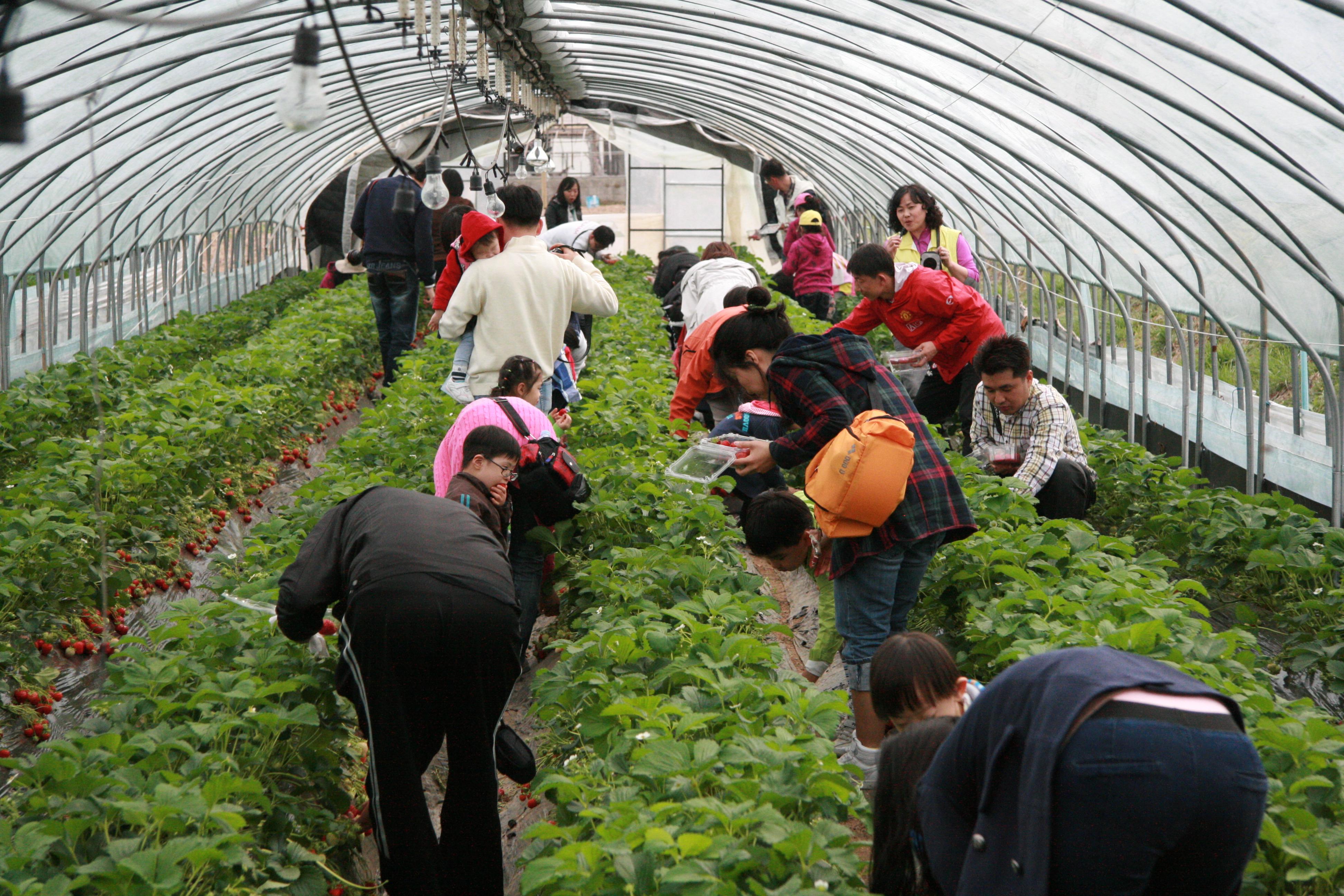 Yangpyeong Strawberry Festival