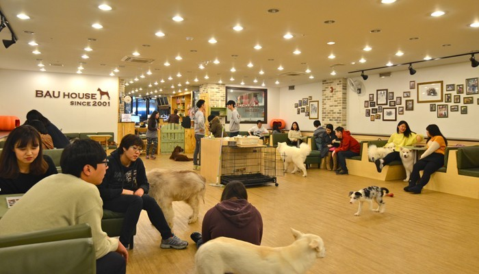 Bau-House-Dog-Cafe-Seoul-Overall
