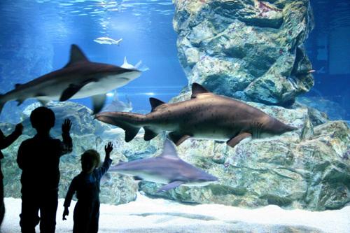 COEX Aquarium(코엑스아쿠아리움)