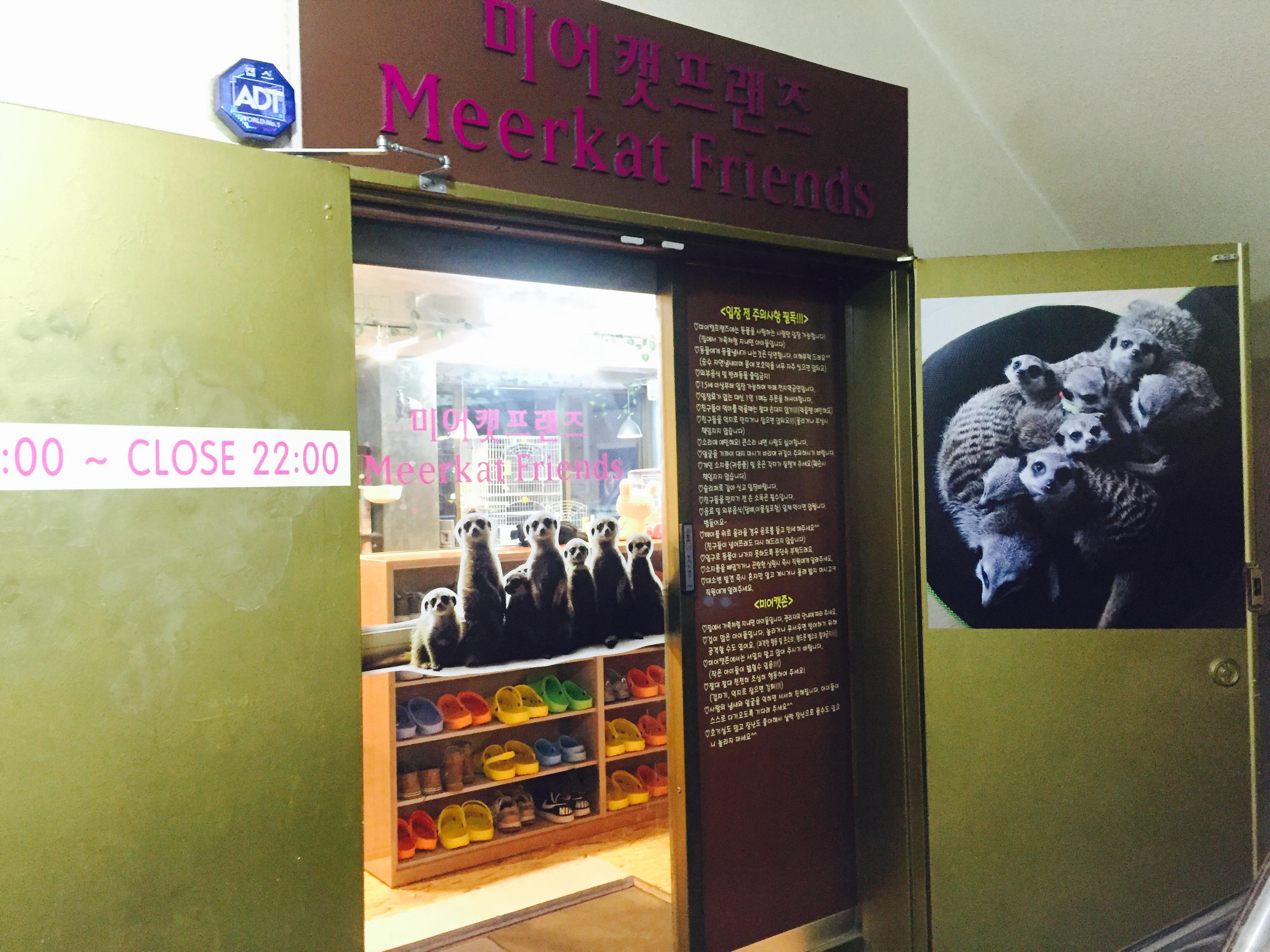 Seoul's Meerkat Cafe!!