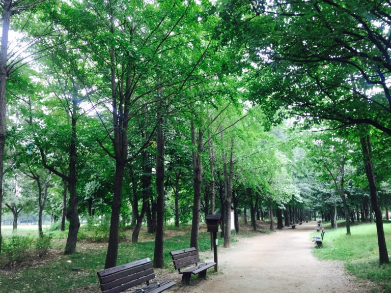 One Day Tour @ Seoul Forest