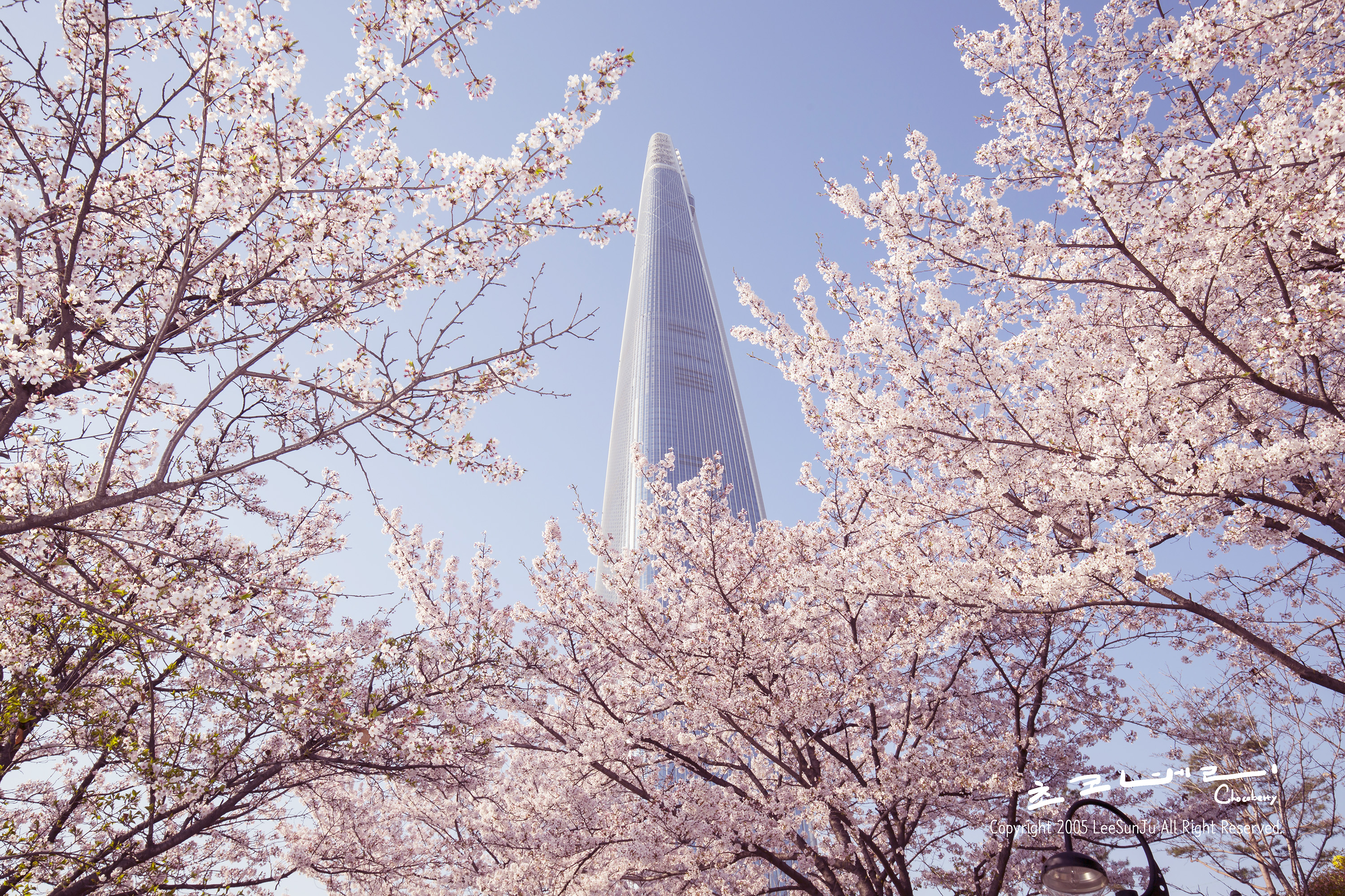 2018 Cherry blossom in Korea – Time, Spots, Tours everything you need to know!